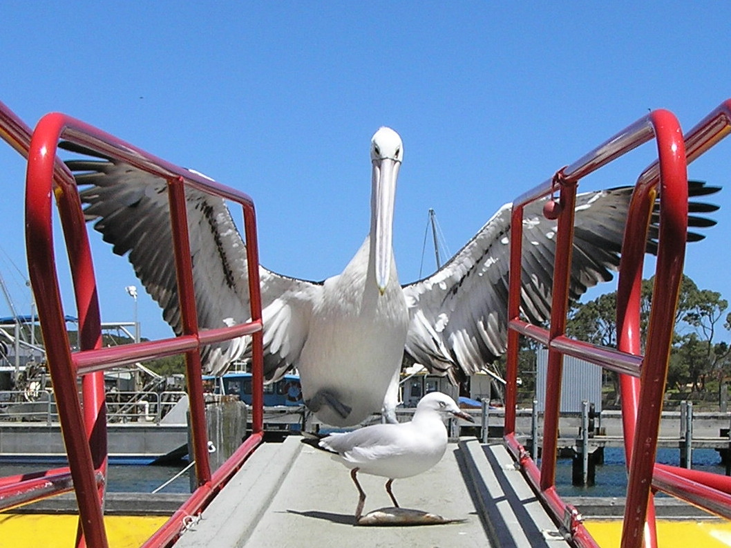 Albany Boat Tours